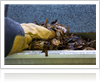 Gutter cleaning to remove pests